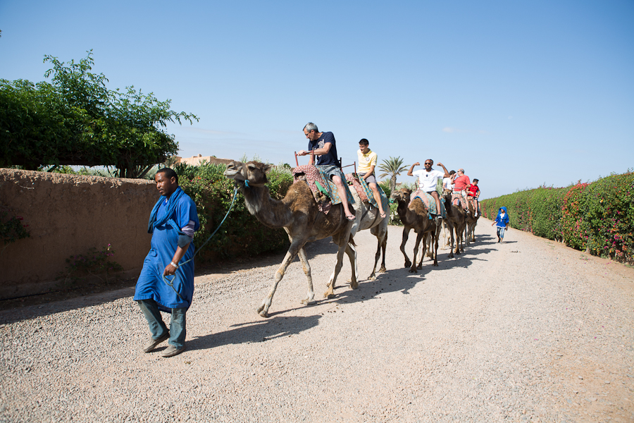 Mariage Maroc, balade à dos de chameau, mariage Charlène & Johann Ramaré